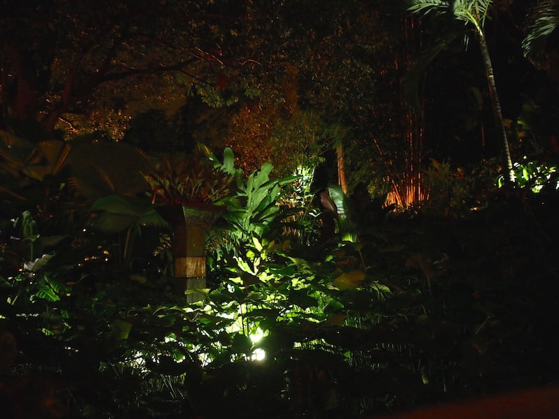 Tabu B&B Cairns tropical garden at night