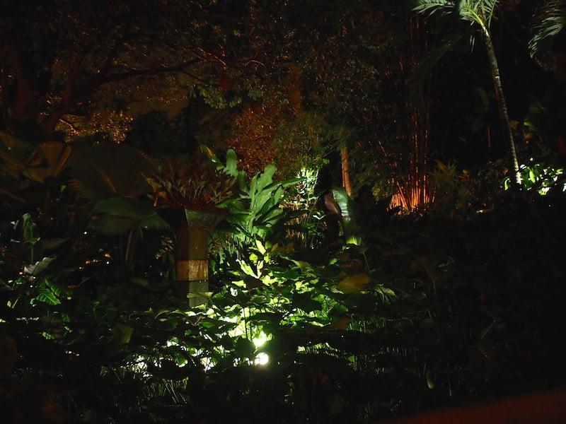 Tabu B&B Cairns tropical garden at night