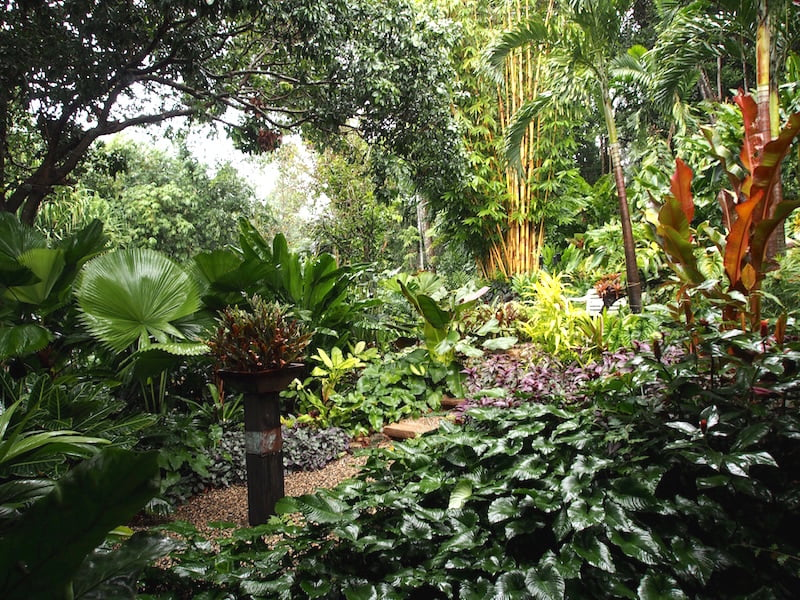 View of the tropical gardens from the verandah of Tabu B&B Cairns