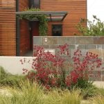 Using kangaroo paws in gardens Design Secret Gardens copy