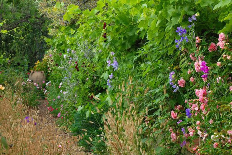 Native grasses and sweet peas in the Rose Walk at La Pietra Rossa in early June - Photo & design Maurizio Usai