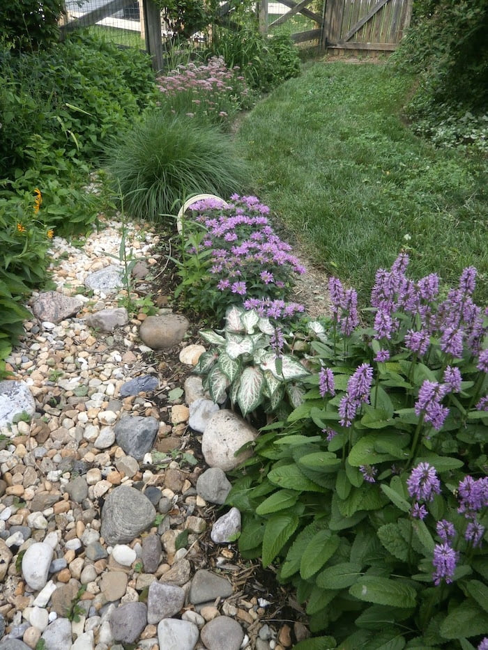New rain garden area blends with the old