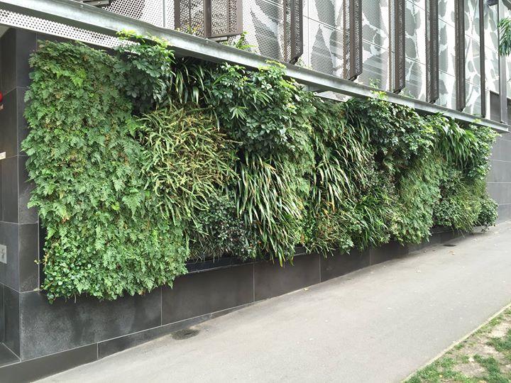 Vertical gardening – Erik Van Zuilekom will explain the practicalities of sustainable vertical landscapes