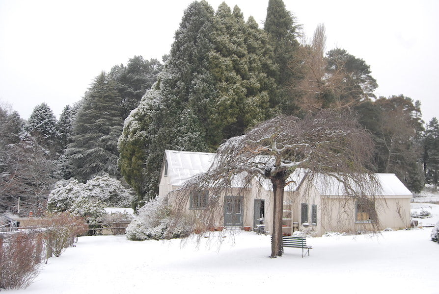 Winter at Hillandale Garden 2015