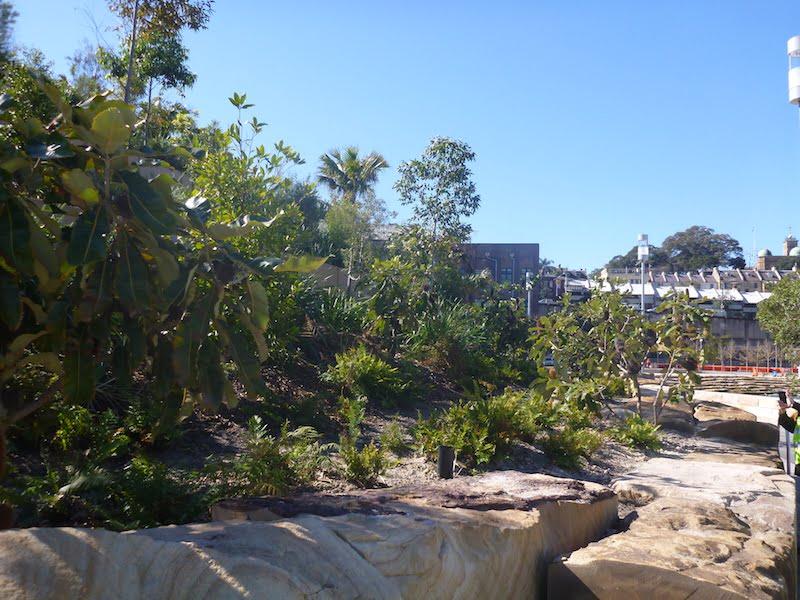 Barangaroo Point Park naturalistic planting