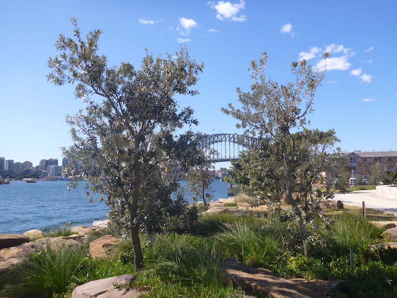 Barangaroo Point Park view to the Harbour Bridge
