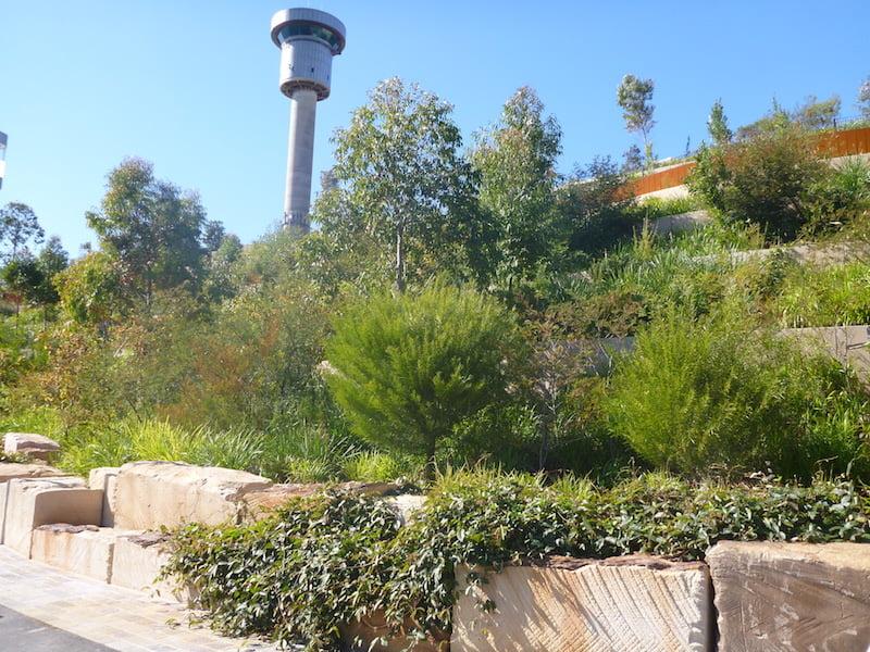 Barangaroo Point Park with cascading vines