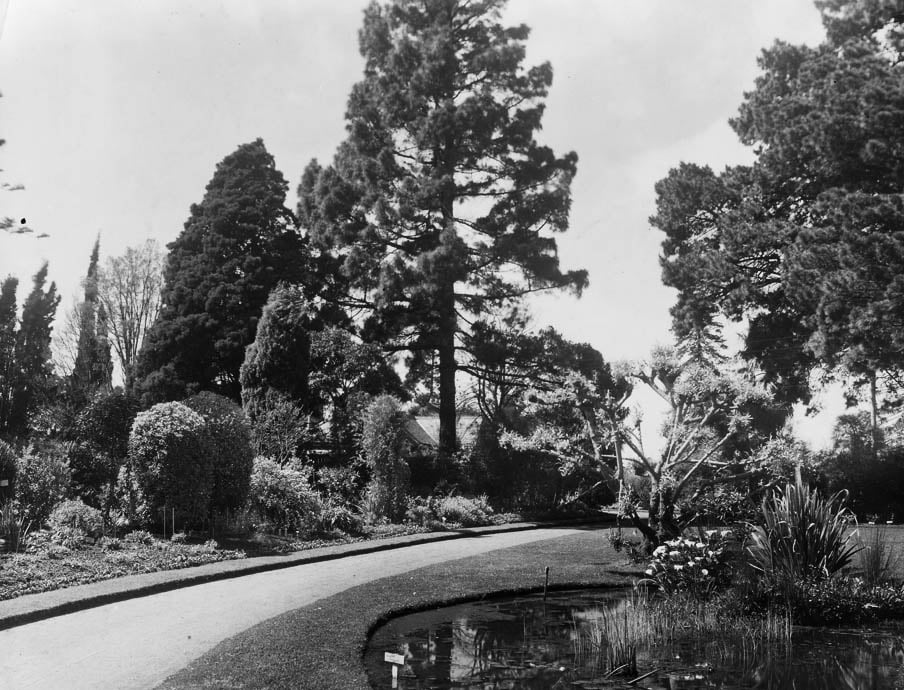 Original driveway with herbaceous border c1916 (courtesy Burnley Archives)