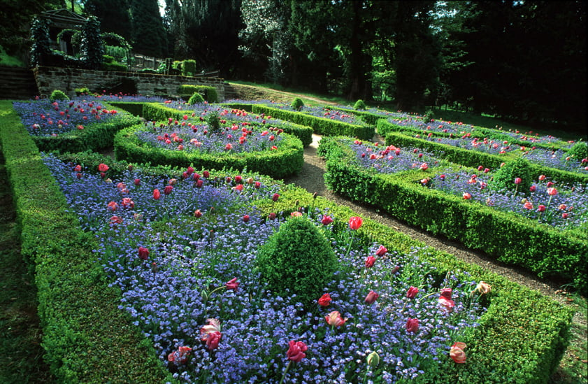 Knot garden with Forget-me-nots and Parrot tulips. Design Piet Oudolf. Reproduced from 'Lessons from Great Gardeners' with permission