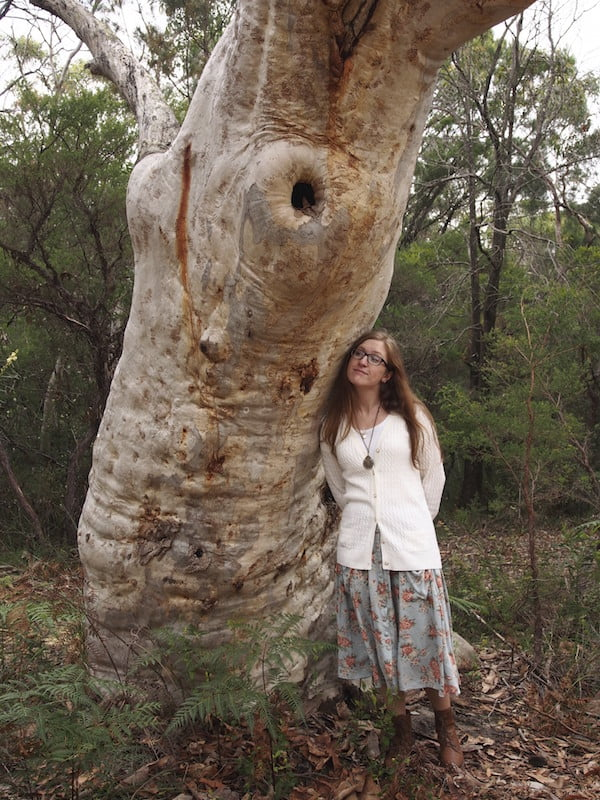 Admiring a giant scribbly gum