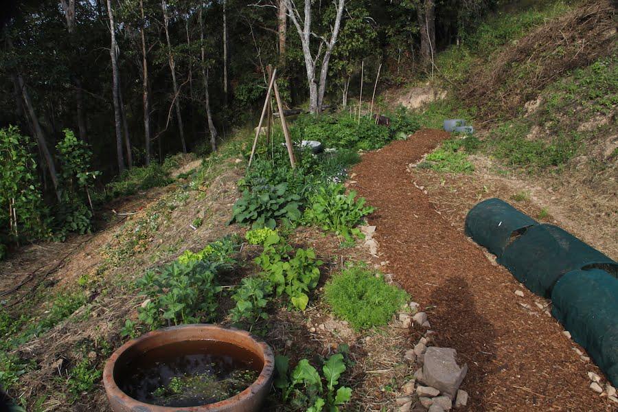 New garden - upper terrace and herb wall