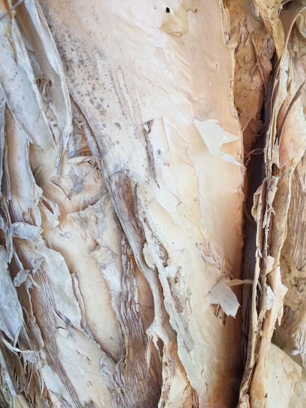 Paperbark - Melaleuca quinquenervia bark