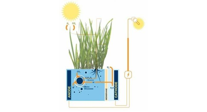 Plant-e-Harnesses-the-Energy-in-Plants-to-Power-Lights-470200-3