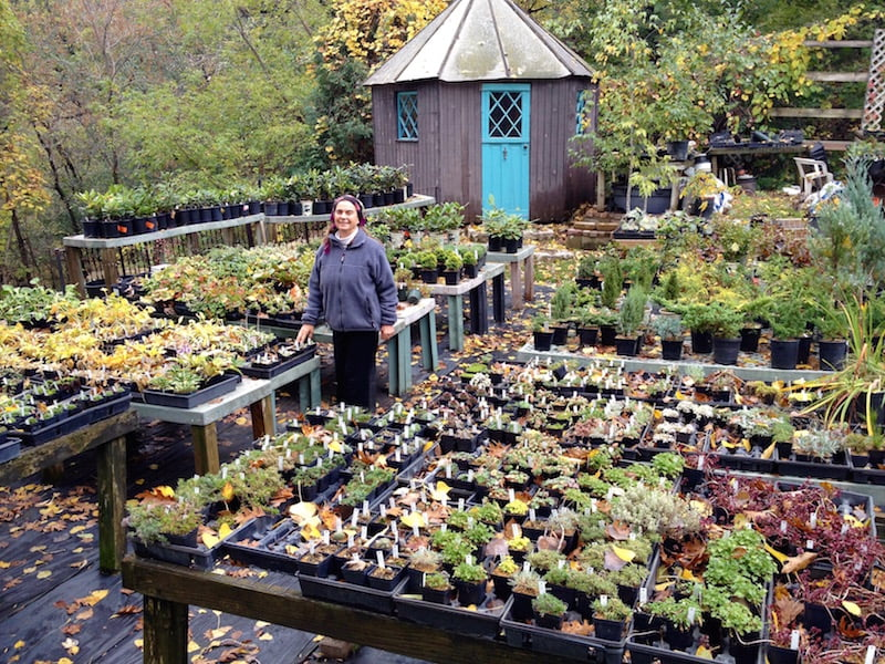 Betty Ann Addison sells many unique and hard-to-find plants in her backyard every season