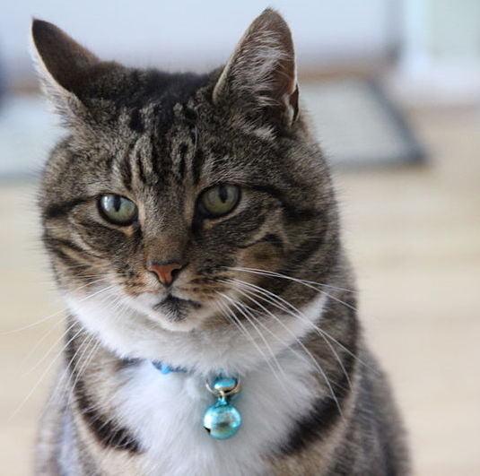 Cat with belled collar Photo Jamesington