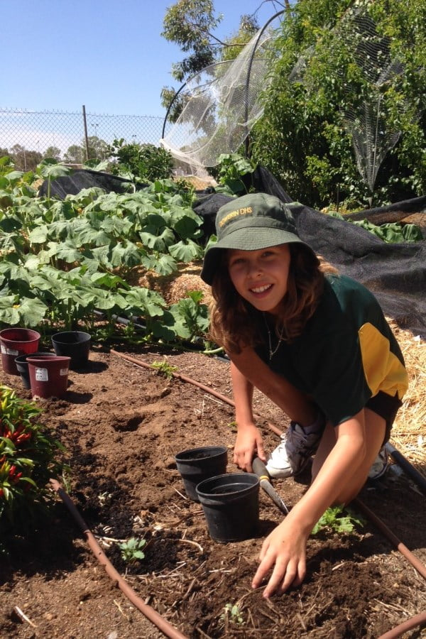 Dowerin District High School planted kale