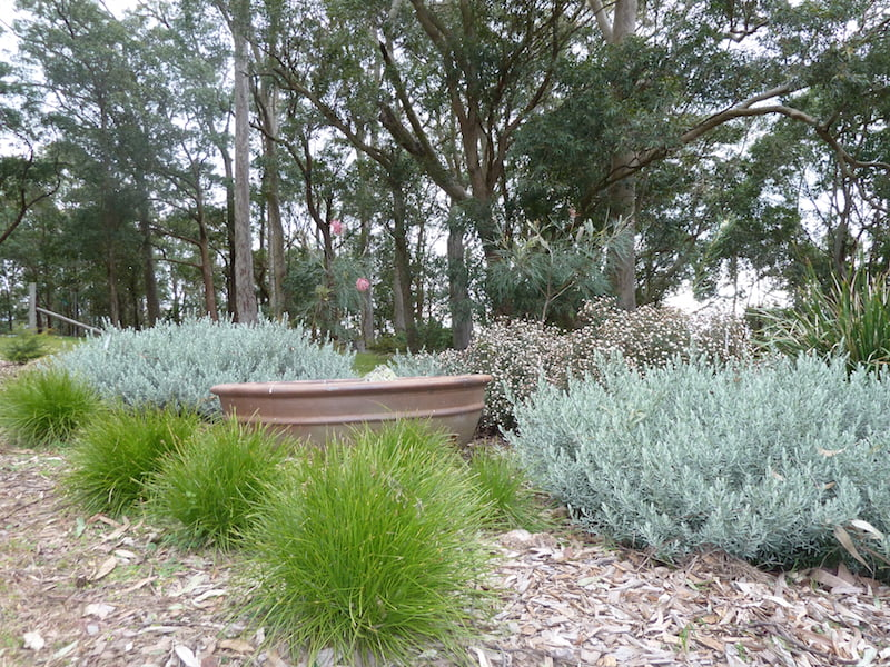 Dry westerly area with 'drought tolerant' species
