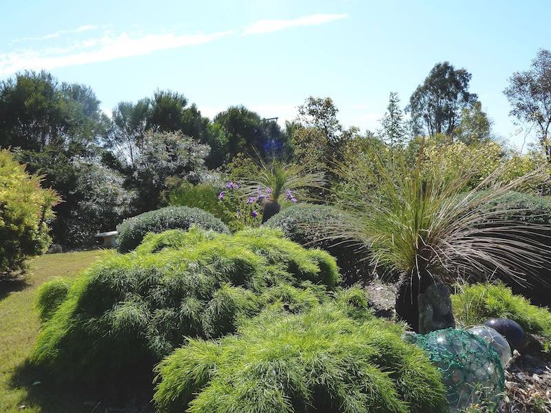North east view Hibiscus 'Barambah Creek', Grevillea flexuosa 'Zig Zag', Acacia cognata 'Limelight', Westringia fruticosa, Anigozanthos, Boronia spp. and Xanthorrhoea