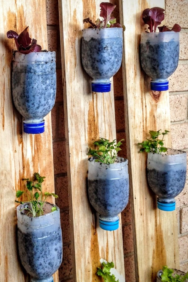 Norwest Christian College herbs in recycled pots