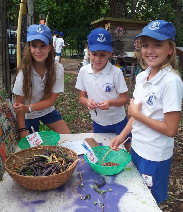 Seaforth Public School seed saving