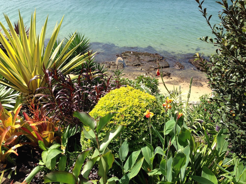 We don't all have quite the backdrop of Gingie, in Darling Point, but we can choose plants that like our locality. Photo: Janna Schreier