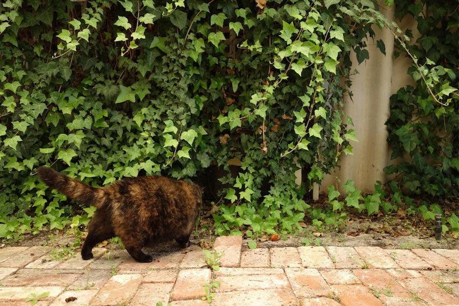 Mona checks out a safe hiding spot