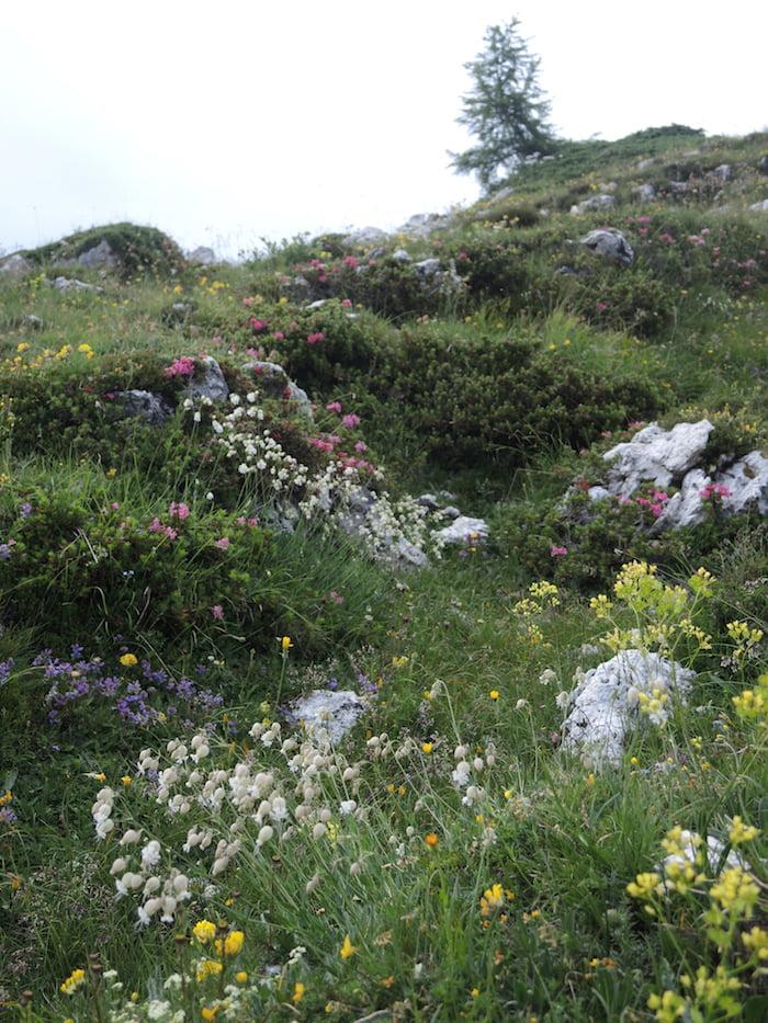 Wildflowers around Refugia Tissi