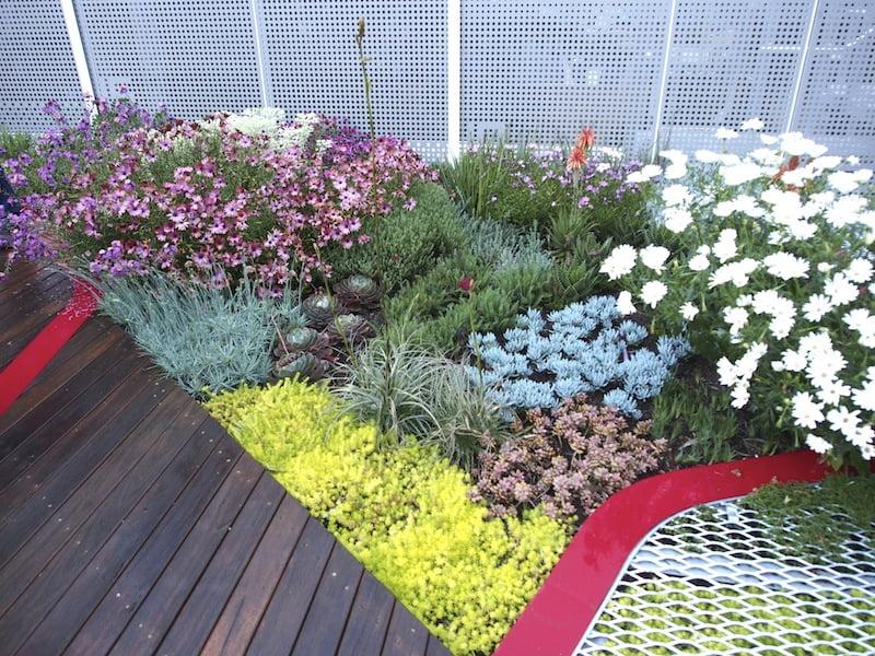 Burnley's green roof