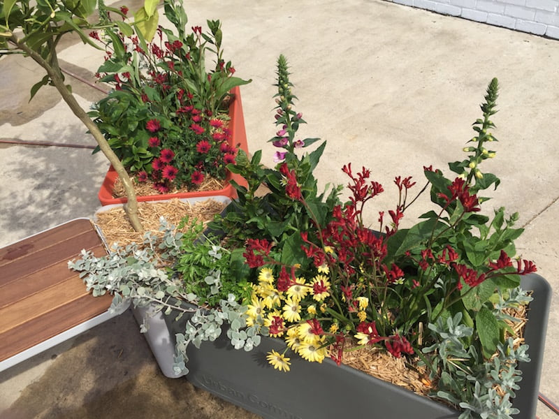 Patch commercial garden Design Phillip Withers