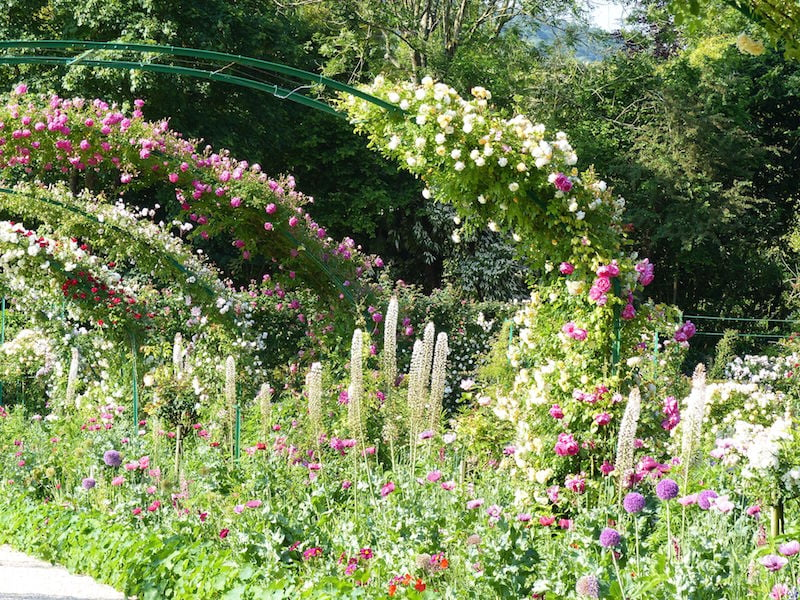 Roses and perennials in Monet's garden at Giverny
