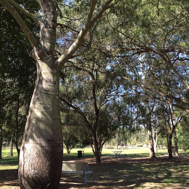 Sherwood Arboretum Photo Mary Jo Katter
