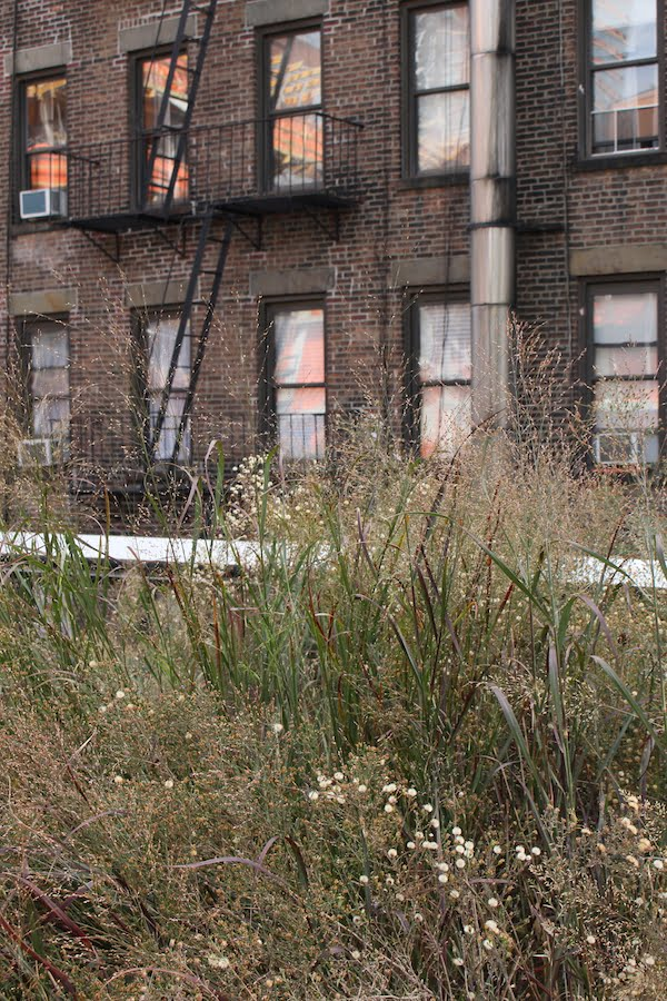 Self seeded trees, weedy grasses poking between steel railway tracks, the High Line charmed me from the first moment