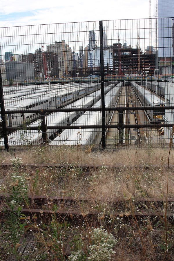 The new section: spontaneous vegetation against the old railway yards