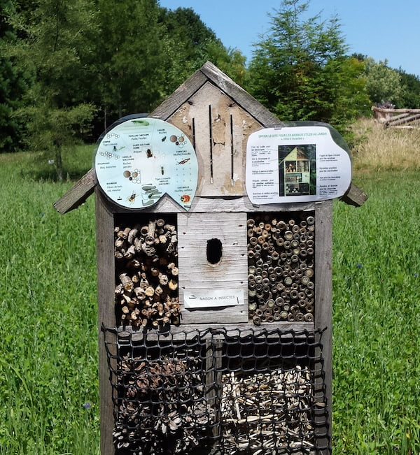 I love these things! A great source of conversation and amusement for all ages. A little bug factory, hard at work.
