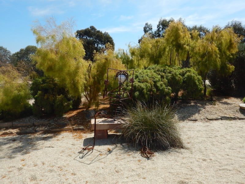 One of the many rustic metal sculptures set against a backdrop of Acacia cognata 'Lime Magik'