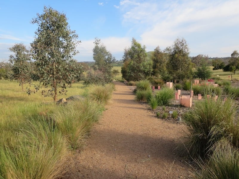 Poa sieberiana in the new Southern Tablelands Ecosystem Park in the National Arboretum, Canberra ACT