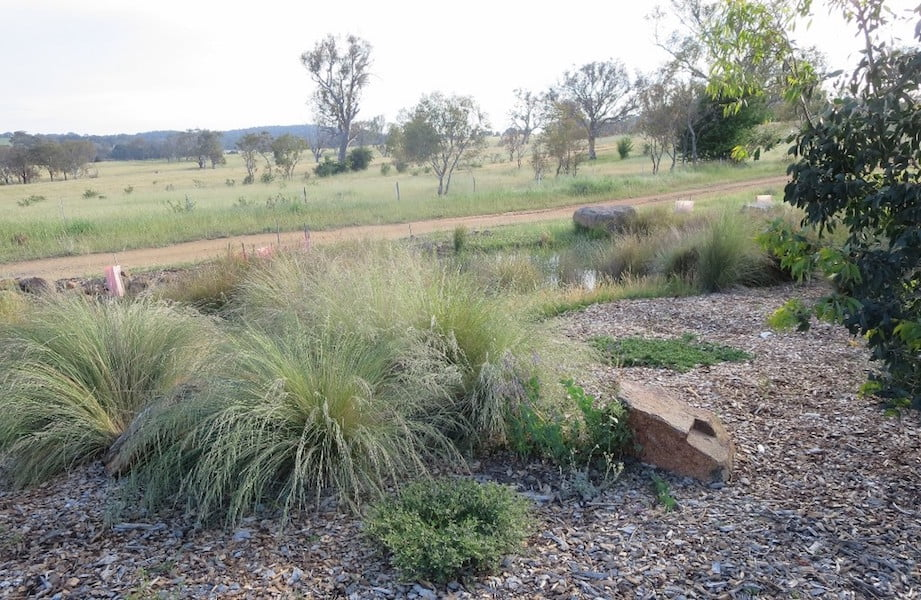 Small wetland area in the new Southern Tablelands Ecosystem Park in the National Arboretum, Canberra ACT