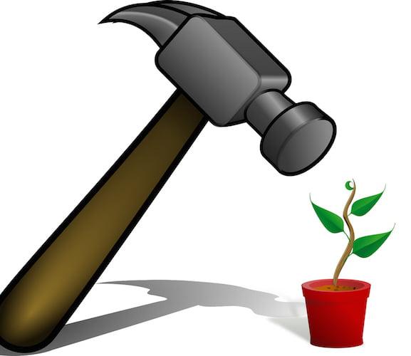 hammer over plant