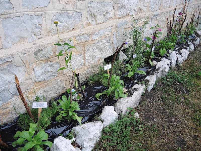 Meeting the challenge of growing herbs at high altitude - black plastic