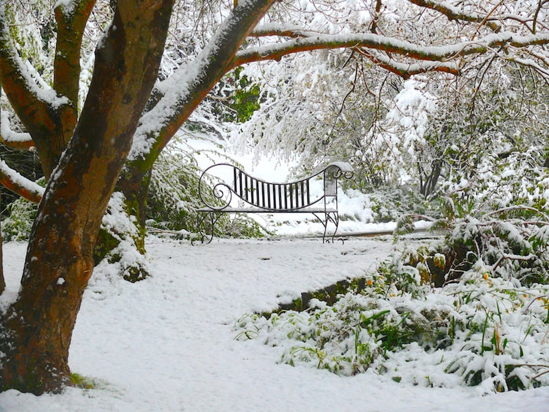 Some winters deliver snow, turning the woodland and reflecting pool into a white fairyland.