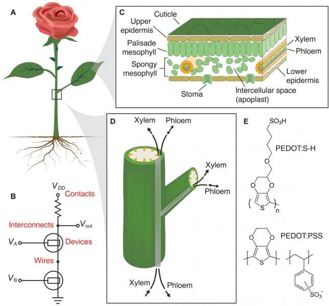 Source: Electronic Plants