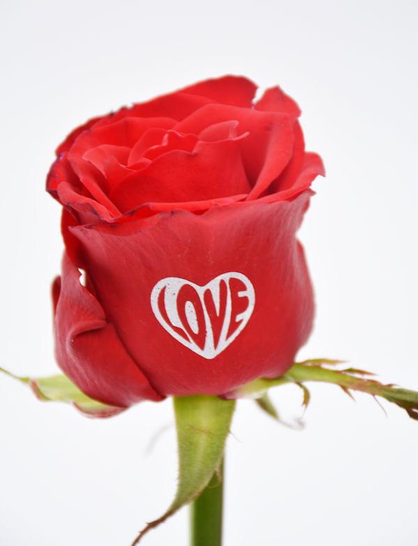 Fransen Roses Netherlands printed roses