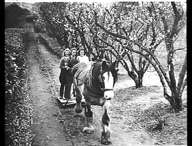 PHOTO TAKEN AT BURNLEY AGRICULTURAL COLLEGE: JULY 1946Source: Museum Victoria. This image is: Public Domain Item no. MM 21625