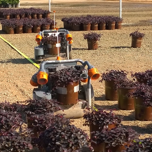 Robotic plant mover in action Photo Ozbreed