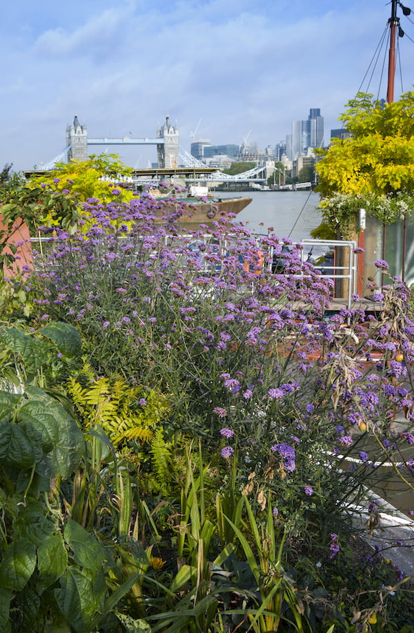 Great Gardens of London page 58 Floating barge gardens on the Thames Photo (c) Marianne Majerus