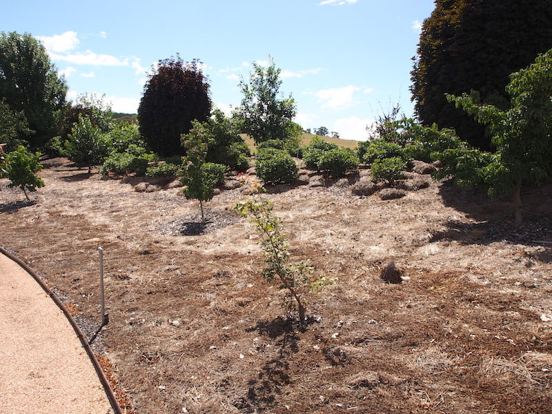 Another bare, mulched garden bed