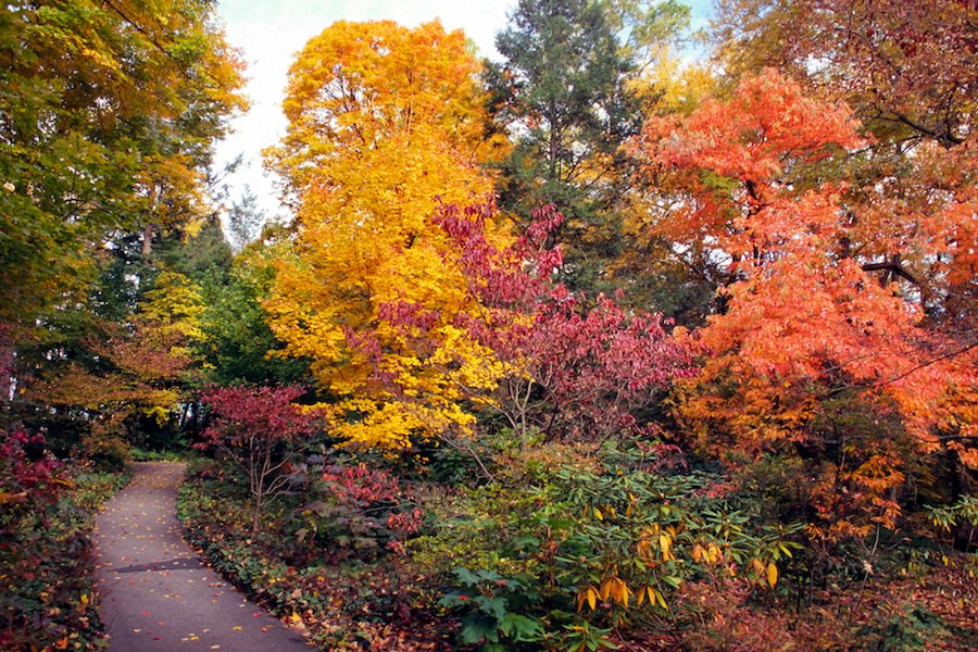 Autumn/fall colour at Longwood Gardens, Pennsylvania