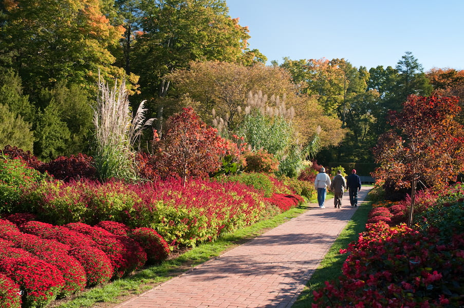 Autumn/fall flowers and foliage in the Brick Walk at Longwood Gardens, Pennsylvania