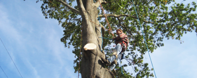 Chad_Tree_Experts_branch_removal