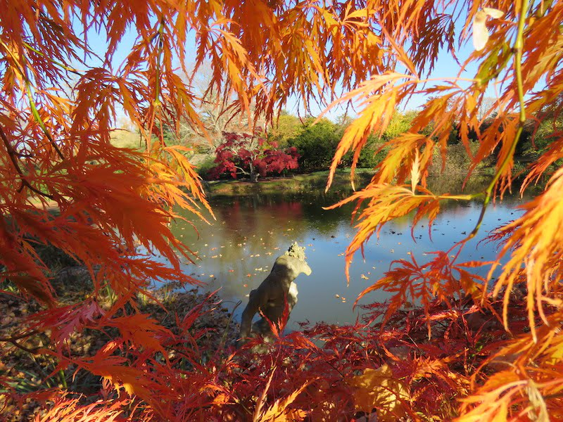 http://gardendrum.com/wp-content/uploads/2016/02/Fall-foliage-at-Old-Westbury-gardens.-Photo-Vince-Kish.jpg